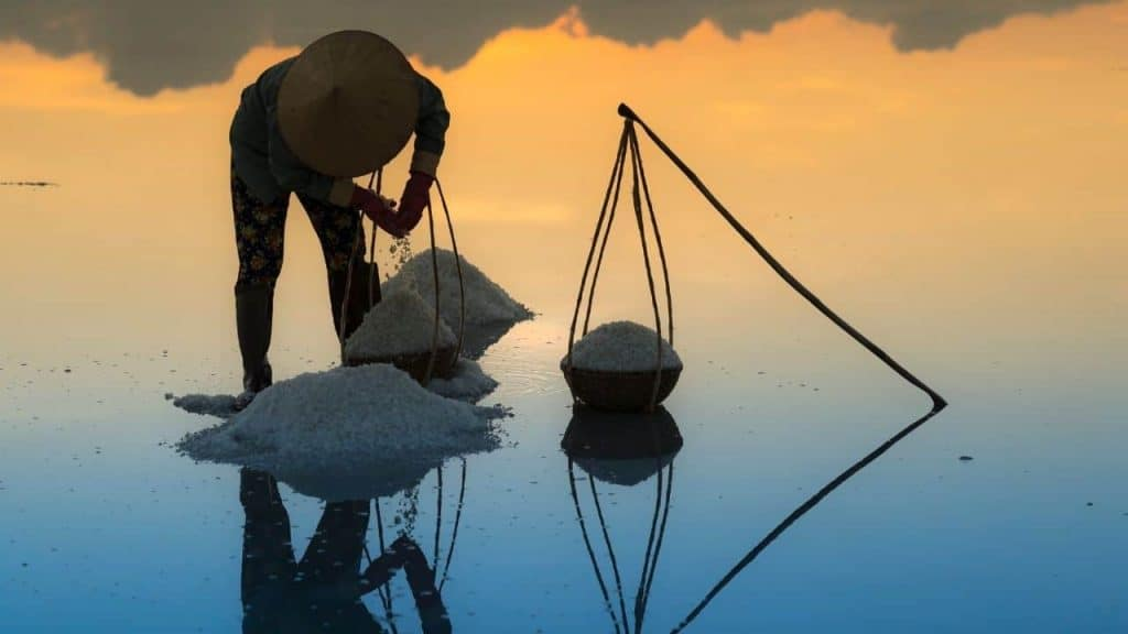extracting salt